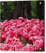 Keukenhof Gardens 16 Acrylic Print