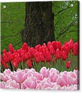 Keukenhof Gardens 18 Acrylic Print