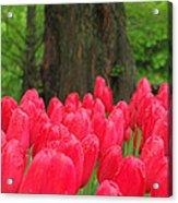 Keukenhof Gardens 19 Acrylic Print