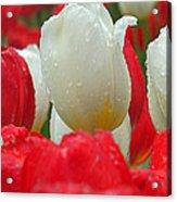 Keukenhof Gardens 21 Acrylic Print
