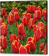 Keukenhof Gardens 28 Acrylic Print