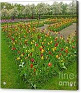 Keukenhof Gardens 29 Acrylic Print