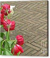 Keukenhof Gardens 36 Acrylic Print