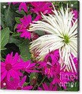 Keukenhof Gardens 38 Acrylic Print