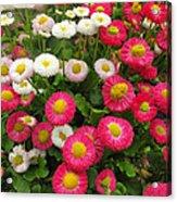 Keukenhof Gardens 39 Acrylic Print