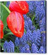 Keukenhof Gardens 4 Acrylic Print
