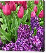 Keukenhof Gardens 40 Acrylic Print