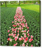 Keukenhof Gardens 41 Acrylic Print