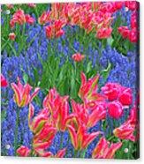 Keukenhof Gardens 5 Acrylic Print