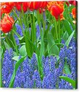 Keukenhof Gardens 6 Acrylic Print