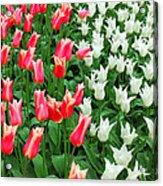 Keukenhof Gardens 7 Acrylic Print