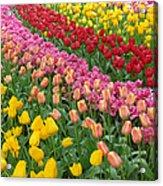 Keukenhof Gardens 74 Acrylic Print
