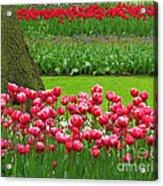 Keukenhof Gardens 91 Acrylic Print