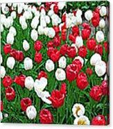 Keukenhof Gardens Panoramic 20 Acrylic Print