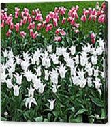 Keukenhof Gardens Panoramic 9 Acrylic Print