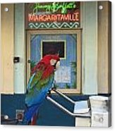 Key West - Parrot Taking A Break At Margaritaville Acrylic Print