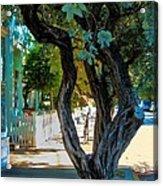 Key West Beauty Acrylic Print by Claudette Bujold-Poirier