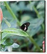Key West Butterfly Conservatory - In Black White And Orange Acrylic Print