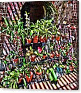 Key West Garden Club Pots Acrylic Print