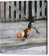 Keywest Florida Rooster Acrylic Print