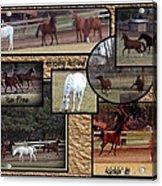Horses Kickin It  Acrylic Print