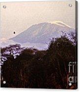 Kilimanjaro In The Morning Acrylic Print