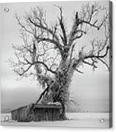 Killer Tree - Outer Banks Acrylic Print