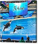 Killer Whales Perform In Shamu Stadium At Seaworld. Acrylic Print