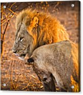 King And Queen Acrylic Print