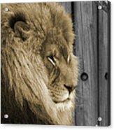 King In Sepia Acrylic Print