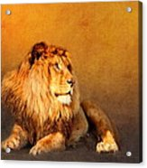 King Leo Acrylic Print
