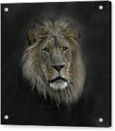 King Of Beasts Portrait Acrylic Print