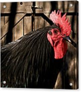 King Of The Coop Acrylic Print