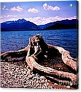 King Of The Driftwood Acrylic Print by Garren Zanker