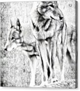Alpha Male Black And White Acrylic Print