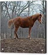 King Of The Hill Acrylic Print by Jennifer  King
