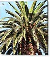 King Palm Acrylic Print