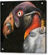 King Vulture - Impasto Acrylic Print
