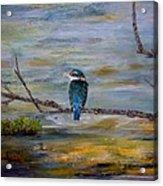 Kingfisher Over Estuary Acrylic Print
