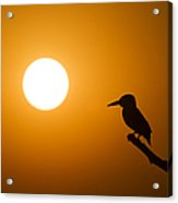 Kingfisher Sunset Acrylic Print