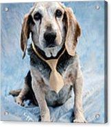 Kippy Beagle Senior And Best Dog Ever Acrylic Print