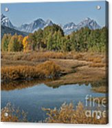 Kiss Of Fall In The Grand Tetons Acrylic Print by Sandra Bronstein