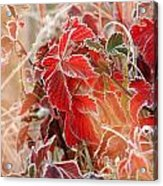 Kissed By Jack Frost Acrylic Print