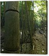 Kissing Bamboo Acrylic Print by Aaron Bedell
