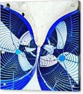 Kissing Fans Acrylic Print