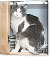 Kitchen Cubbard Cat Acrylic Print