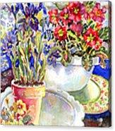 Kitchen Primrose Acrylic Print by Ann  Nicholson
