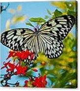 Kite Butterfly Acrylic Print