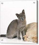 Kitten And Puppy Lying Together Acrylic Print