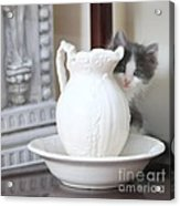 Kitten And The Picther Acrylic Print